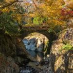 CD125T 魔林峡から道の駅やまくにへ  秋の紅葉ラーツー その③