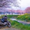 CB1100 早朝から桜に会いに・・・  福岡お花見ツーリング その①