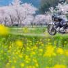 CB1100 菜の花畑見つけた  福岡お花見ツーリング その②