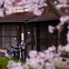 CB1100  一の坂川  平成最後の桜とオートバイ その①